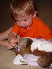 Бесплатный Главная Поднятый Детские обезьян-капуцинов